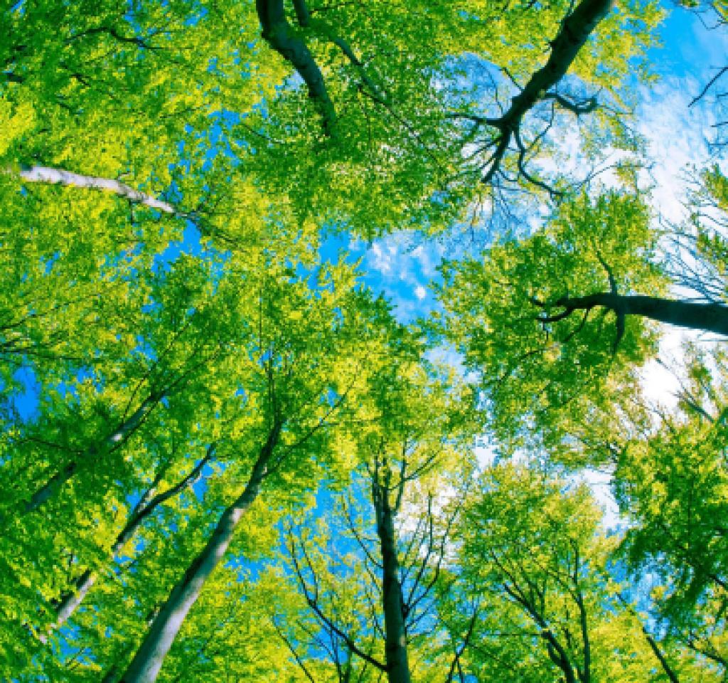 AlkorSMART erdő